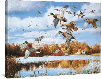 David Maass Opening Day - Mallards Gallery Wrapped Canvas