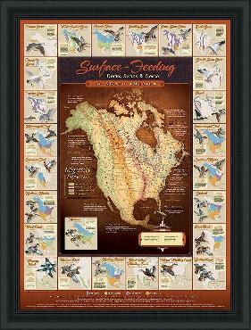 David Maass Migration Map - Surface Feeding Waterfowl Framed Open Edition