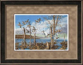David Maass Wild Wings on the Upper Mississippi Framed