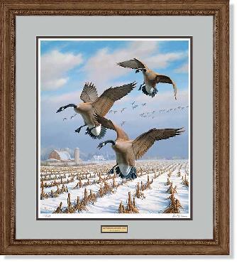 David Maass Winter Wonder - Canada Geese Framed