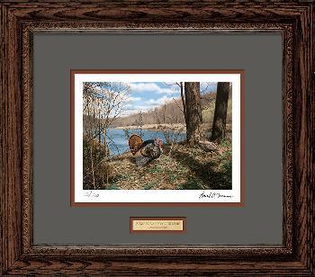 David Maass Zumbro Valley Courtship - Turkeys Framed Artist