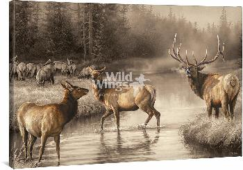 Rosemary Millette Autumn Mist - Elk  Open Edition Wrapped Canvas