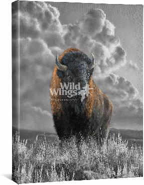Rosemary Millette Distant Thunder - Bison Open Edition Wrapped Canvas