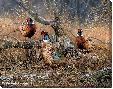 Rosemary Millette First Dusting - Pheasants