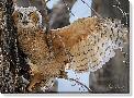 Vic Schendel Fledgling Owlet