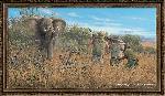 Michael Sieve Elephant Hunter