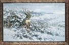 Michael Sieve White Silence-Mule Deer
