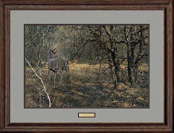 Scot Storm Monarch - Whitetail Deer Framed