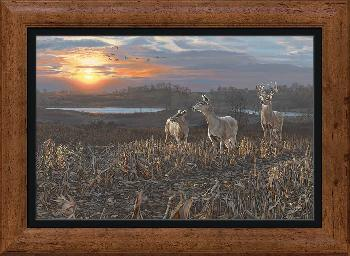 Scot Storm Evening Glow - Whitetail Deer Framed Canvas