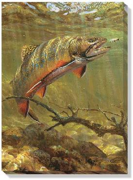Mark Susinno Brook Trout And Royal Coachman Open Edition Wrapped Canvas