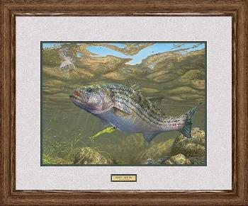 Mark Susinno Decisions - Striped Bass Framed Remarqued