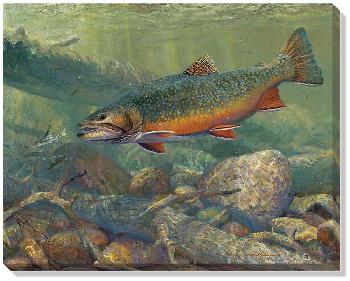 Mark Susinno Hunting the Hunters Brook Trout Open Edition Wrapped Canvas