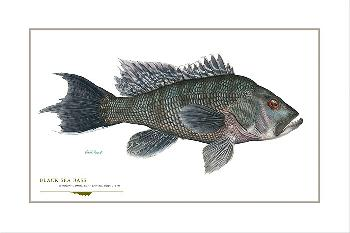 Flick Ford Black Sea Bass Signed Open Edition Giclee on Paper