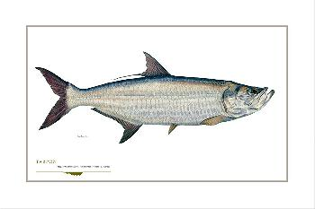 Flick Ford Tarpon Signed Open Edition Giclee on Paper
