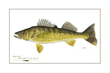 Flick Ford Walleye Signed Open Edition Giclee on Paper