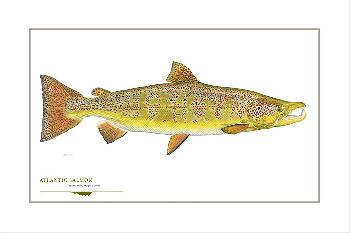 Flick Ford Atlantic Salmon Signed Open Edition Giclee on Paper