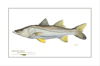 Flick Ford Common Snook Signed Open Edition Giclee on Paper