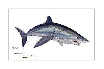 Flick Ford Alpha Shortfin Mako Signed Open Edition Giclee on Paper