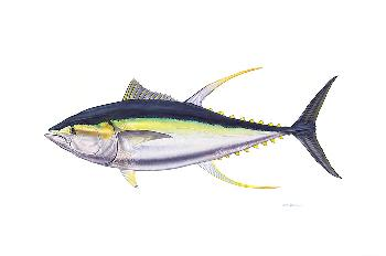 Flick Ford Trophy Yellowfin Tuna Signed Open Edition Giclee on Paper