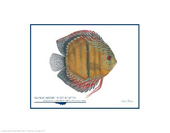 Flick Ford Manacapuru Blue Discus Open Edition on Paper