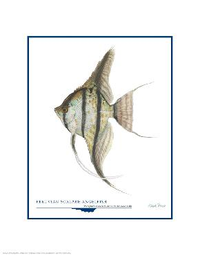 Flick Ford Peruvian Scalare Angel Fish Open Edition on Paper