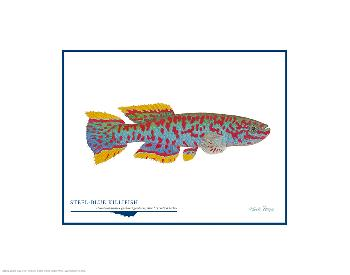 Flick Ford Steel-Blue Killifish Open Edition on Paper
