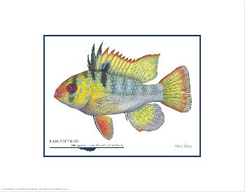 Flick Ford Ram Cichlid Open Edition on Paper