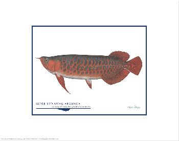 Flick Ford Super Red Asian Arowana Open Edition on Paper