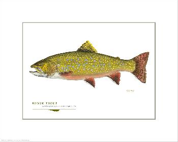Flick Ford Brook Trout Open Giclee Edition on Paper