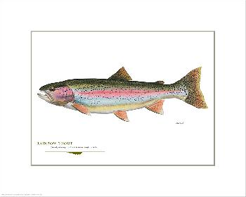 Flick Ford Rainbow Trout Open Giclee Edition on Paper
