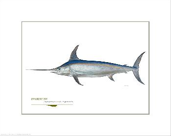 Flick Ford Swordfish Open Giclee Edition on Paper