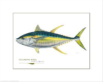 Flick Ford Trophy Yellowfin Tuna Open Giclee Edition on Paper