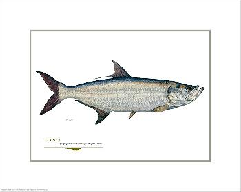 Flick Ford Tarpon Open Giclee Edition on Paper