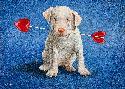 Will Bullas Puppy Lover