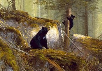 Michael Coleman Adventurer - Black Bears Artist