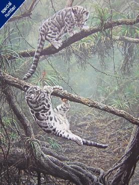 Alan Hunt Adventurers - Clouded Leopard Cubs Print #1/50 Artist