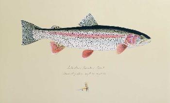 James Prosek Alaskan Rainbow Trout Artist