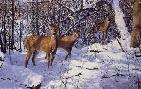 Robert Hautman Alder Thicket - Whitetail Deer