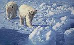 John Seerey-Lester Along The Ice Floe Polar Bears