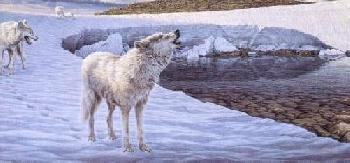 Lee Kromschroeder Along the Watch - Arctic Wolves