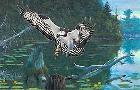 Robert Kray American Osprey