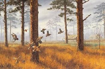 David Maass Among the Pines Quail