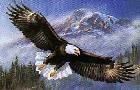 James Meger Anthem - American Bald Eagle