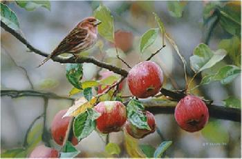 Terry Isaac Apple Time - Purple Finch