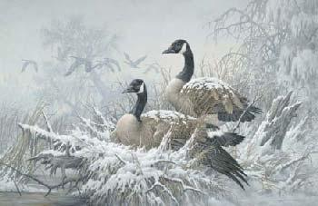 Larry Fanning April Snow Canada Geese Giclee on Canvas