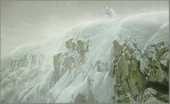 Robert Bateman Arctic Cliff White Wolves