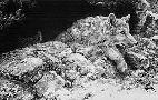 John Seerey-Lester Arctic Wolf Pups