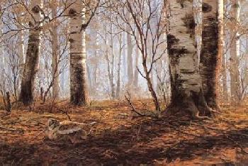 David Maass Autumn Birch Woodcock Artist