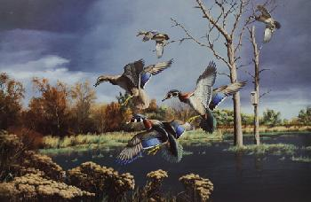 David Maass Autumn Haven - Wood Ducks Artist