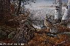 Scott Zoellick Autumn Mist - Ruffed Grouse